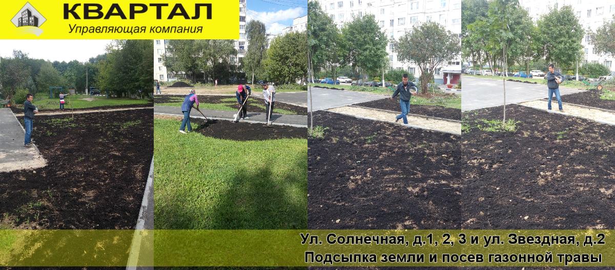 Посев газонной травы своими руками летом 43